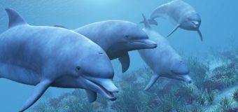 Канада вводит запрет на разведение и содержание дельфинов в неволе