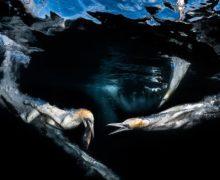 Фото дня: за рыбой!