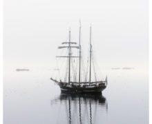 Фото: аристократы морей