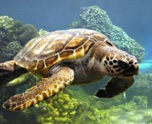 Объявлен международный творческий конкурс «Золотая Черепаха» на тему природы