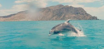 Наблюдаем за дельфинами