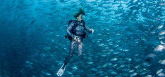 «Я родился в воде…» — выставка подводной фотографии откроется в Москве