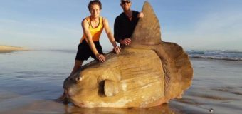 Фото дня: рыба-луна на берегах южной Австралии