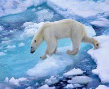 Приоритет — развитие Арктики