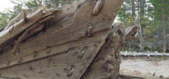«Вытегорская ладья» признана уникальным артефактом