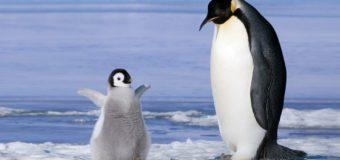 25 апреля — Всемирный день пингвинов