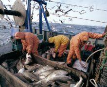 Приарктические страны совместно изучат запасы рыбы в северных водах