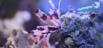 Не то что кажется: животные с растительными именами в Приморском океанариуме