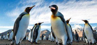 Вас ждут киты и пингвины