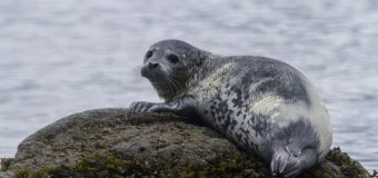 Более 20 мертвых тюленей найдено на берегу Финского залива.