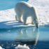 Океанологи предупреждают о необратимых изменениях в мировом океане.
