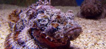 «Опасные морские животные» — вышла новая книга известного дайвера