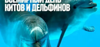 19 февраля — Всемирный день защиты морских млекопитающих
