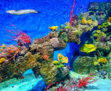 «Москвариум» приглашает на весенний фестиваль «Подводная оранжерея»