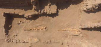 В Перу под древними пирамидами обнаружены захоронения китов и акул