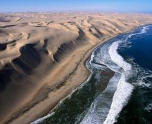 У побережья Намибии погибли 86 дельфинов