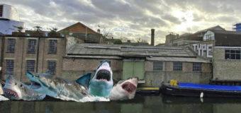В воды лондонского канала запустят шесть белых акул