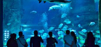 «Москвариум» покажет, как кормят акул
