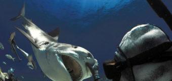 Пенсионер в возрасте 78 лет более 60 лет занимается дайвингом с тигровыми акулами