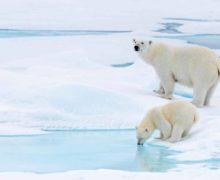 Новая книга: об Арктике от самых ранних упоминаний северных земель и до наших дней