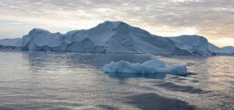 Ученые СПбГУ обнаружили в Арктике редкую улитку, получающую энергию из разлагающейся древесины