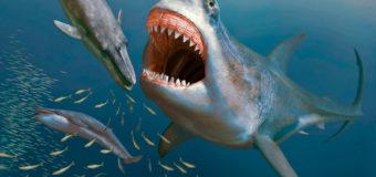 Музей Мирового океана: видеоурок «Палеонтология. Удивительные существа и где они обитали»