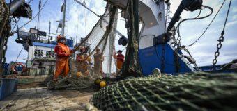WWF России просит ученых ввести ограничения на вылов минтая в Чукотском море