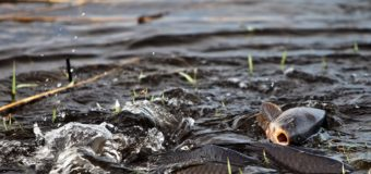 Астраханские рыбаки опасаются гибели рыбы на Волге