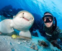 Исследователи мира акул — новые партнеры OCEAN-TV