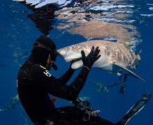 Фотосессия с лимонной акулой по кличке Снути
