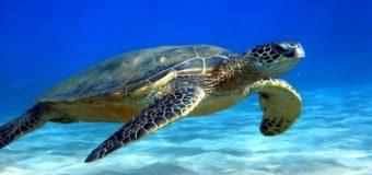 23 мая — Всемирный день черепахи