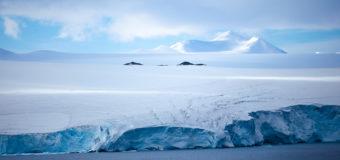 Ученые поделились данными о зеленом снеге в Антарктиде