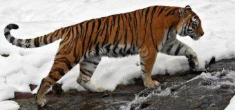 WWF России обратился к Правительству РФ с предложением по выходу из кризиса