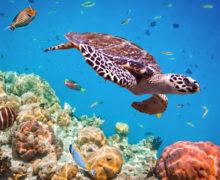 3 подарка к Всемирному дню океанов