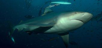 Опубликован трейлер фильма ужасов «Глубокое синее море 3» — акулы снова выходят на охоту