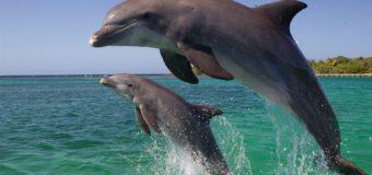 Мультфильм о дельфинах