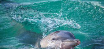 Отчего в Черном море гибнут дельфины?