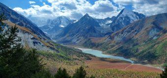 WWF:  9 современных фильмов про дикую природу