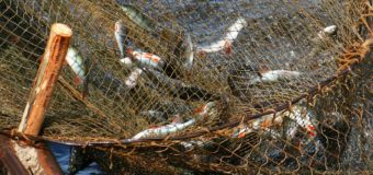Международный день борьбы с незаконным рыбным промыслом