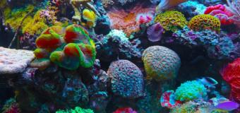 Улитки и рыбы спасут рифовую экосистему