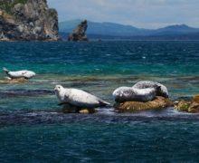 Дальневосточный морской заповедник во Всемирный день океанов (видео)