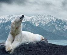 Новый проект WWF: Арктика — безопасный дом для каждого