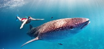 У китовых акул нашли зубы на глазах