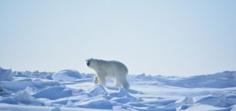 В Якутии появились «Медвежьи острова»