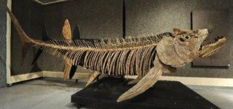 В Аргентине найдена крупнейшая в истории окаменелая рыба