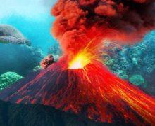 В кратерах подводных вулканов обнаружили мутировавших акул