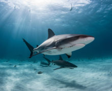 Фестиваль акул на OCEAN-TV!