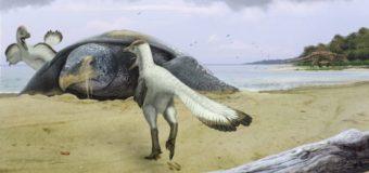 Палеонтологи нашли в Саратовской области скелет гигантской черепахи