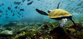 В глубинах Тихого океана нашли десятки новых видов животных
