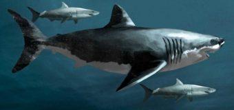 Ученые обнаружили акулу, которая считалась исчезнувшей